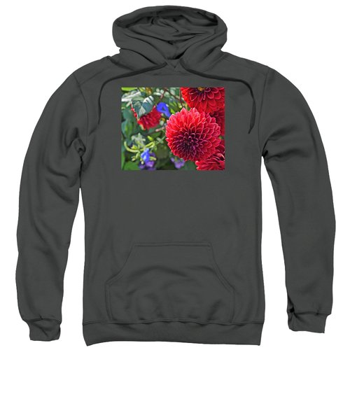 2015 Mid September At The Garden Dahlias 2 Sweatshirt