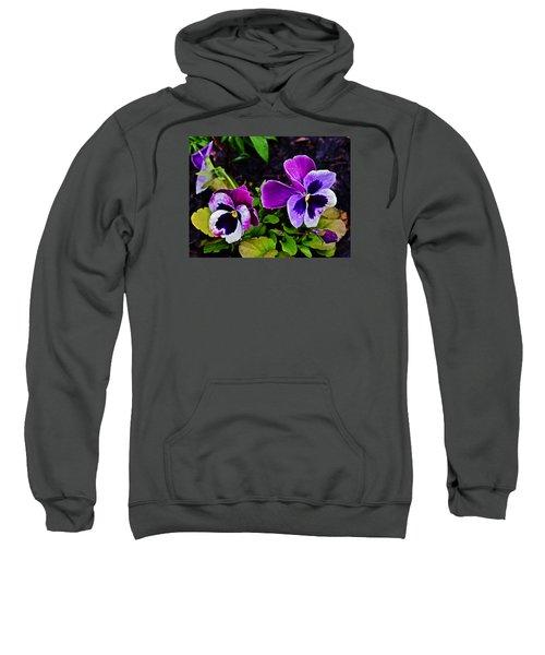 2015 Spring At Olbrich Gardens Violet Pansies Sweatshirt
