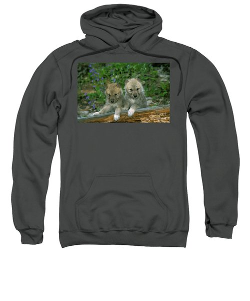 Arctic Wolf Canis Lupus Tundrarum Sweatshirt