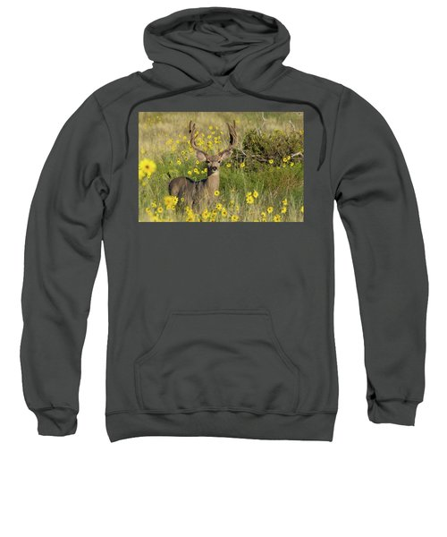 Eight Point Buck In The Grass Lands Of The Great Sand Dunes Sweatshirt