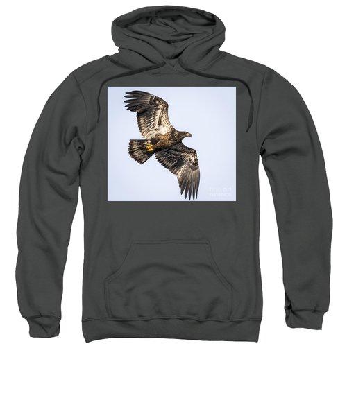 Juvenile Bald Eagle  Sweatshirt