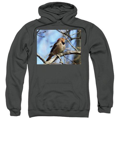 Northern Flicker Woodpecker Sweatshirt
