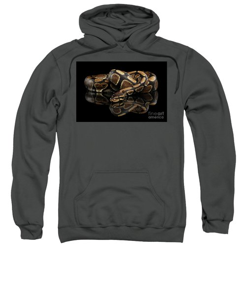 Ball Or Royal Python Snake On Isolated Black Background Sweatshirt