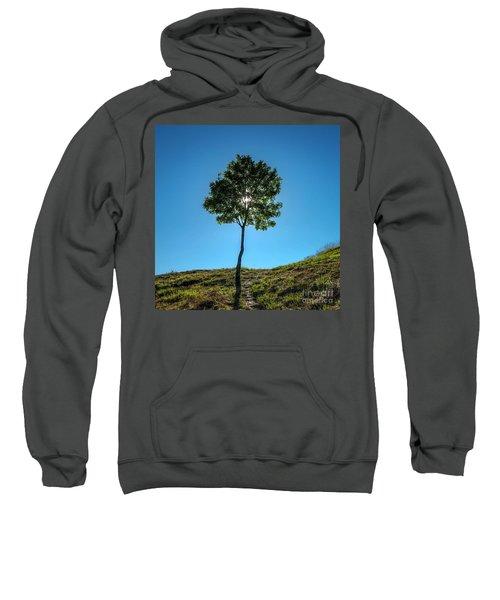 Isolated Tree Sweatshirt