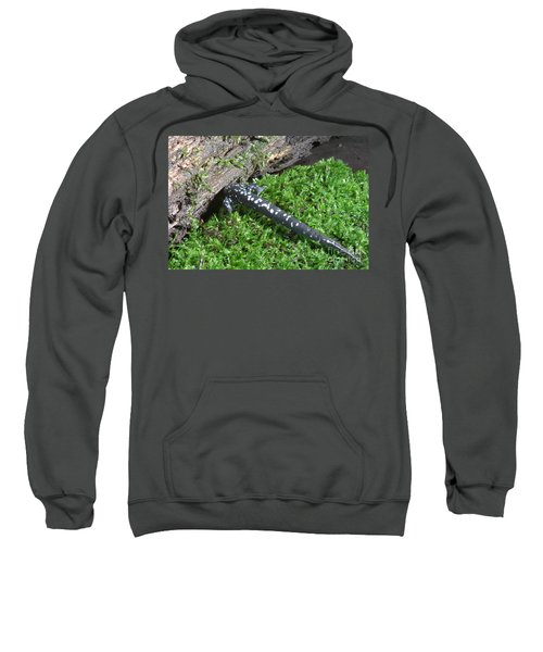 Slimy Salamander Sweatshirt by Ted Kinsman