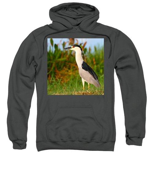 Black Crowned Night Heron Sweatshirt