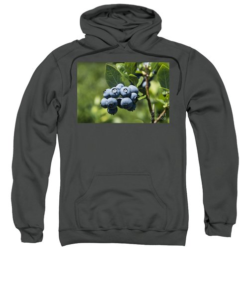Blueberry Bush Sweatshirt