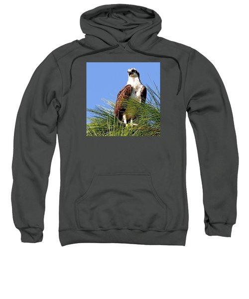 Osprey Sweatshirt