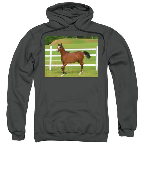 A Beautiful Arabian Filly In The Pasture. Sweatshirt