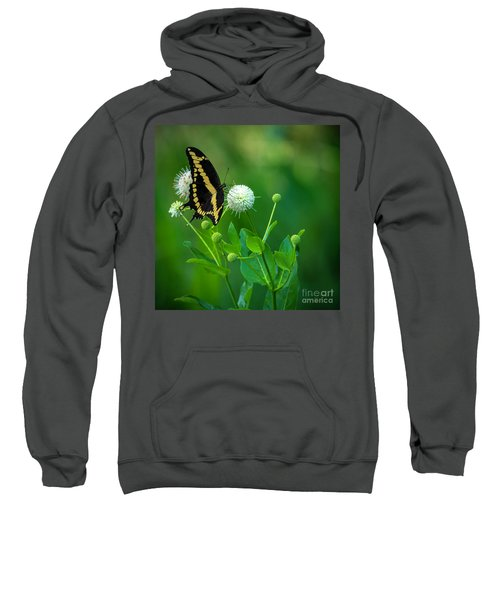 A Beautiful Day Sweatshirt