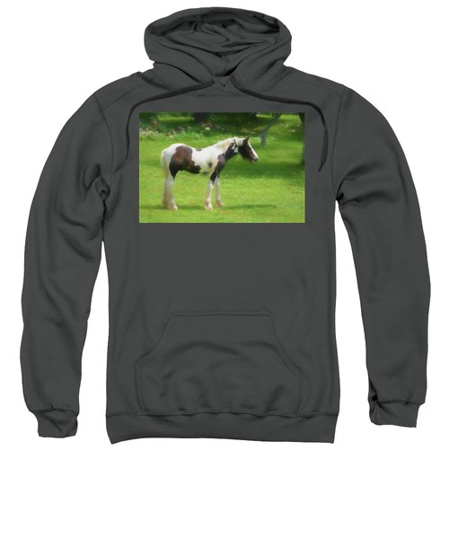 A Beautiful Young Gypsy Vanner Standing In The Pasture Sweatshirt