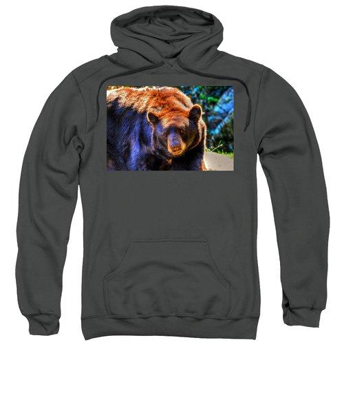 A Curious Black Bear Sweatshirt