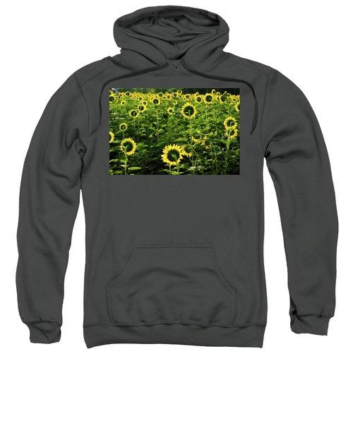 A Flock Of Blooming Sunflowers Sweatshirt