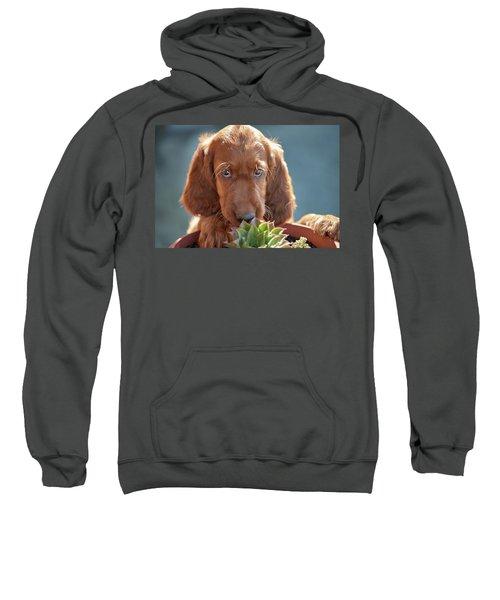 A Gardener Sweatshirt