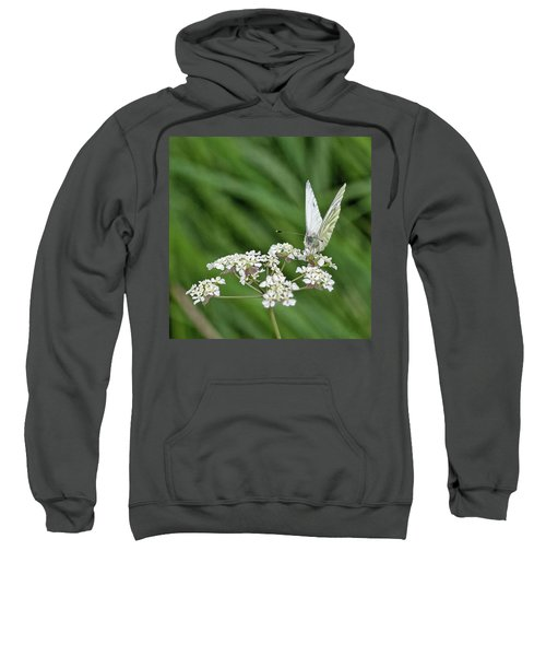 A Green-veined White (pieris Napi) Sweatshirt by John Edwards