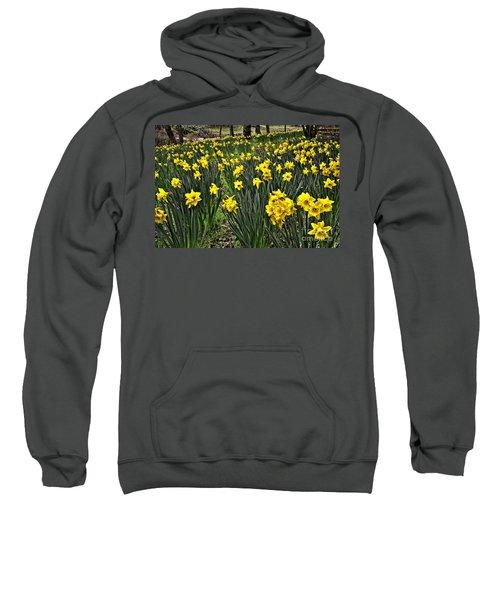 A Host Of Golden Daffodils Sweatshirt