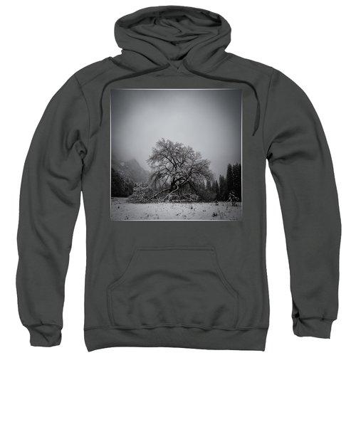 A Magic Tree Sweatshirt