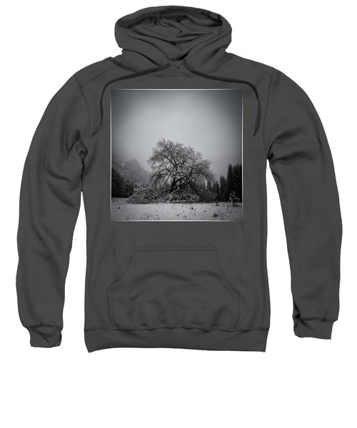 A Magic Tree Sweatshirt