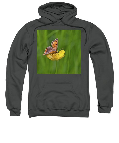A Small Copper Butterfly (lycaena Sweatshirt by John Edwards