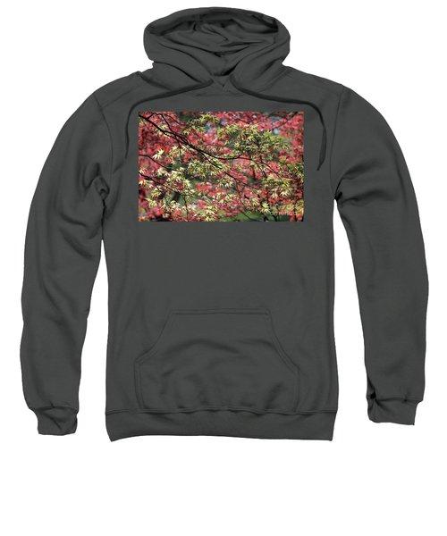 Acer Leaves In Spring Sweatshirt