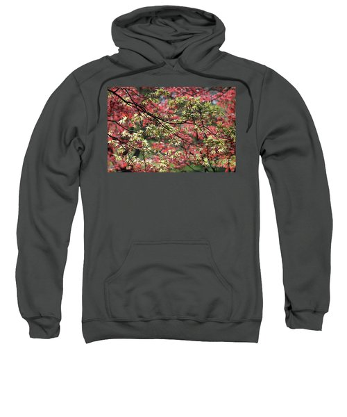 Acer Leaves In Spring Sweatshirt
