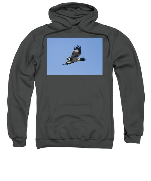 Acorn Woodpecker Sweatshirt