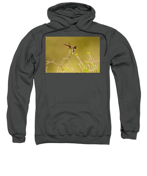 Acrobat Sweatshirt