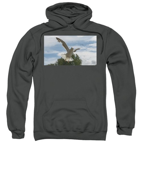 Adult Seagull In Flight Sweatshirt