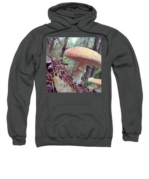 Alle Unter Einem Hut.  #mushrooms Sweatshirt