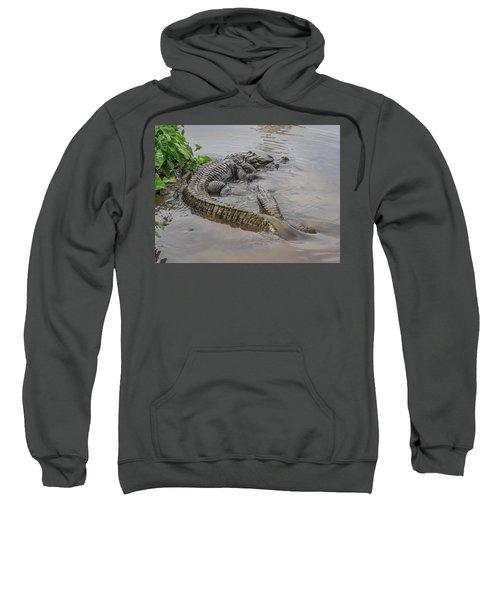 Alligators Courting Sweatshirt