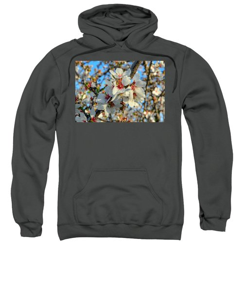 Almond Blossoms Sweatshirt