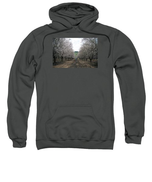Sweatshirt featuring the photograph Almonds Of Lachish by Dubi Roman