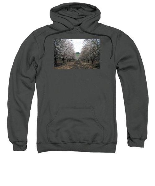 Sweatshirt featuring the photograph Almonds Of Lachish by Dubi Roman