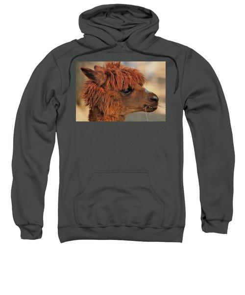 Alpaca Portrait Sweatshirt