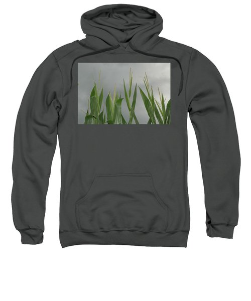 Amber Waves Sweatshirt
