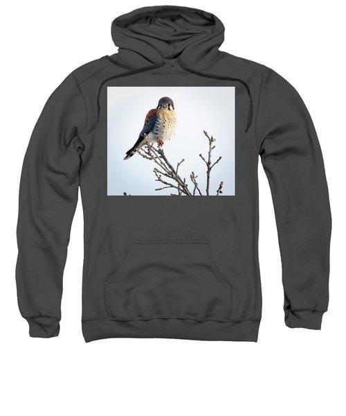 American Kestrel At Bender Sweatshirt