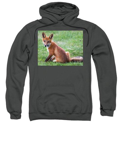 American Red Fox  Sweatshirt
