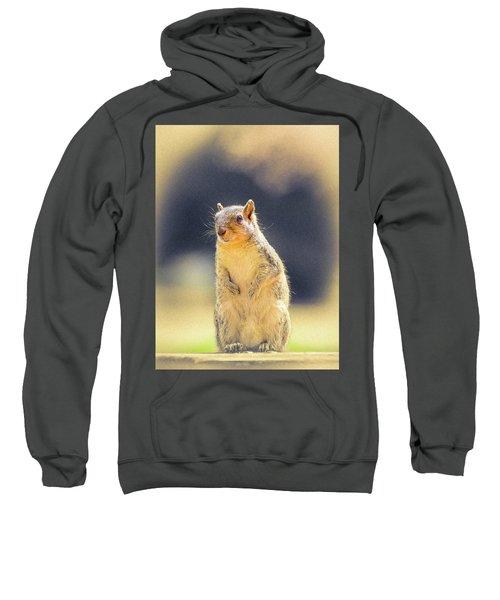 American Red Squirrel Sweatshirt