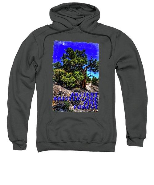 Ancient Bristlecone Pine Tree Sweatshirt