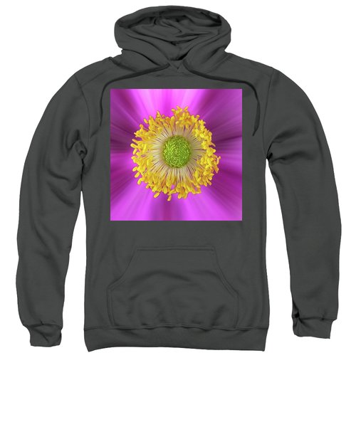 Anemone Hupehensis 'hadspen Sweatshirt