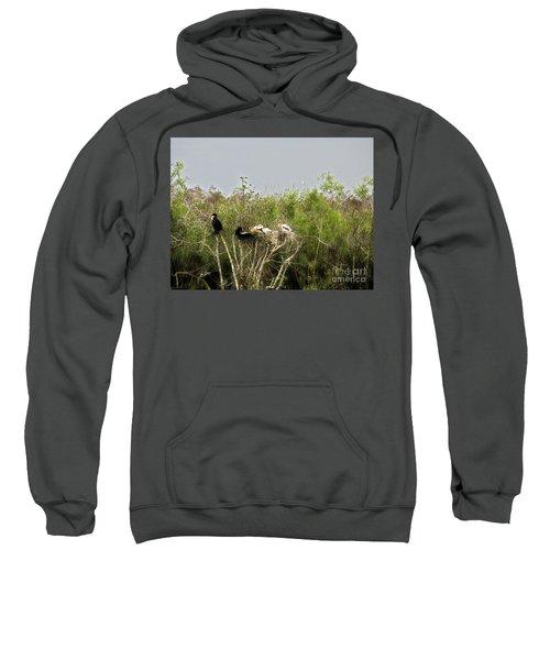 Anhinga Family Sweatshirt