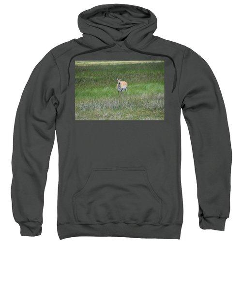 Prong Horned Antelope Lake John Swa Co Sweatshirt
