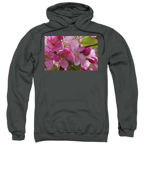 Apple Blossoms Sweatshirt