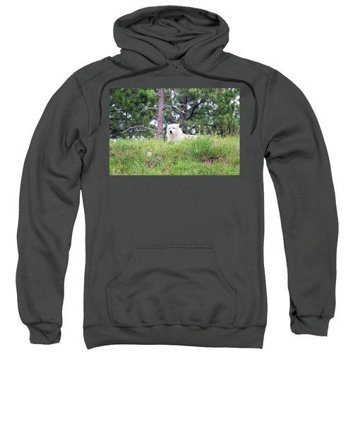 Arctive Wolf Lying Down Sweatshirt