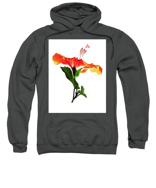 Art Orange Sweatshirt