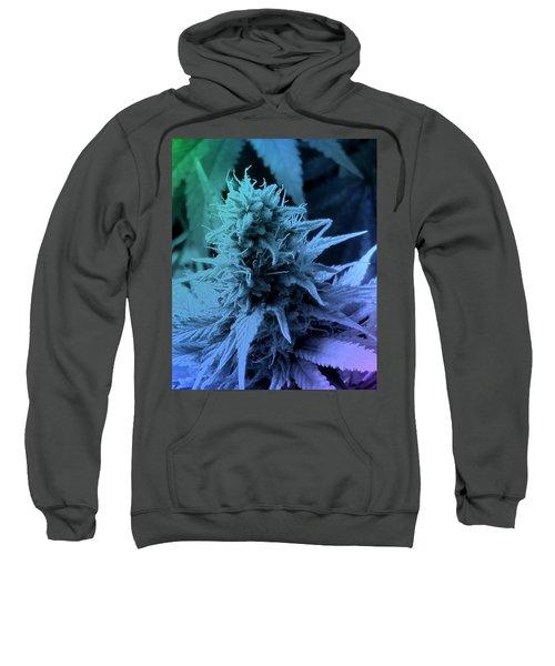 Artful Oasis Macro Abstract 112216.5 Sweatshirt