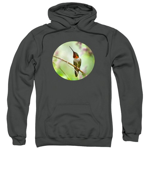 Hummingbird Looking For Love Sweatshirt