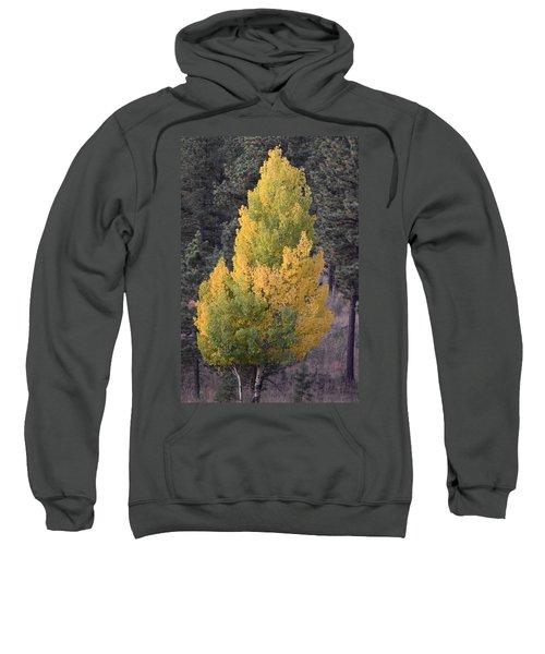 Aspen Tree Fall Colors Co Sweatshirt