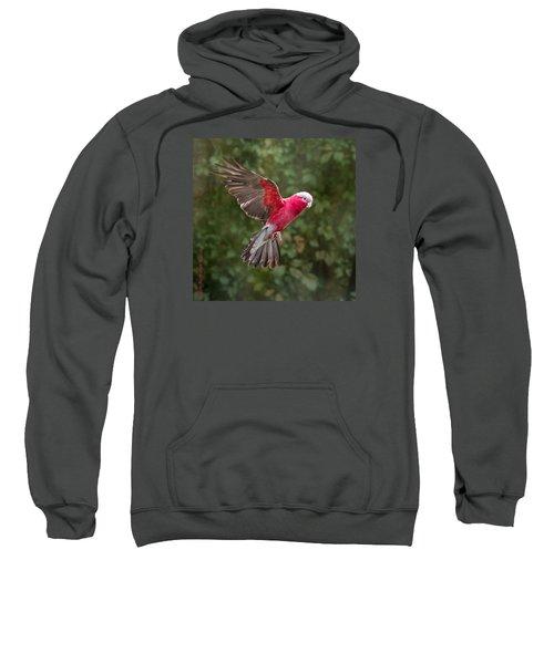 Australian Galah Parrot In Flight Sweatshirt