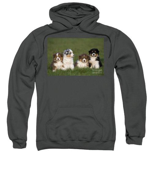 Australian Shepherd Puppies Sweatshirt